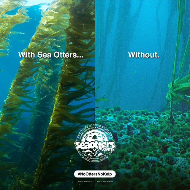 640×640-no-otters-no-kelp