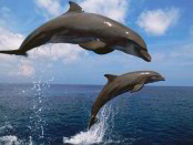 dolphins-451562