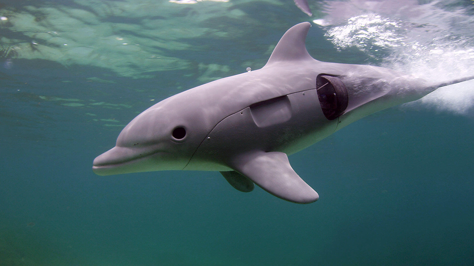 5337701-high-dolphins-spy-in-the-pod